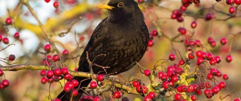 How to care for the birds in autumn