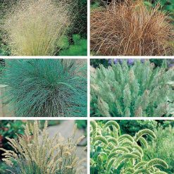 Grasses Seed