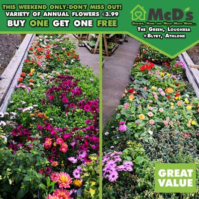annuals-in-variety