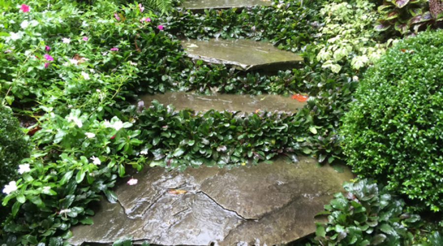 5 Ways to Manage Your Garden For Heavy Rain