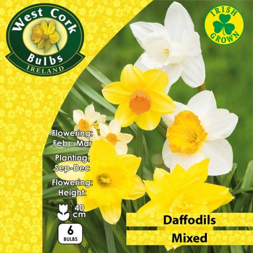Daffodil Mixed Prepack 6 Bulbs   MIXPP   Spring Bulbs Delivered
