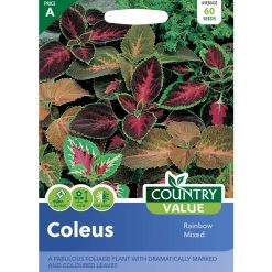 Coleus Rainbow Mixed| Flower Seeds| Nationwide Delivery