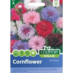 Cornflower Tall Mixed| Flower Seeds| Nationwide Delivery