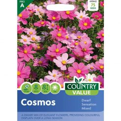 Cosmos Dwarf Sensation Mixed| Flower Seeds| Nationwide Delivery