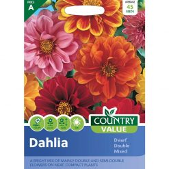 Dahlia Dwarf Double Mixed| Flower Seeds| Nationwide Delivery