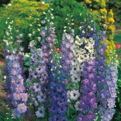 Delphinium Pacific Giants Mixed| Flower Seeds| Nationwide Delivery