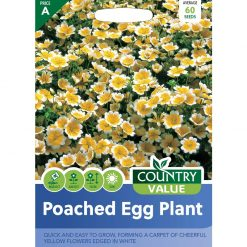 Poached Egg Plant| Flower Seeds| Nationwide Delivery