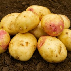 Bonnie Second Earlies 2kg| Seed Potatoes | Nationwide Delivery