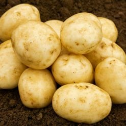 Carlingford Second Earlies 2kg| Seed Potatoes | Nationwide Delivery