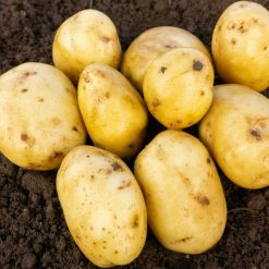 Casablanca First Earlies 2kg| Seed Potatoes | Nationwide Delivery