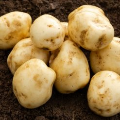 Foremost First Earlies 2Kg| Seed Potatoes | Nationwide Delivery