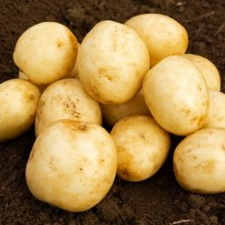 Harmony Maincrop 2kg| Seed Potatoes | Nationwide Delivery