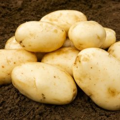 International Kidney First Earlies| Seed Potatoes | Nationwide Delivery
