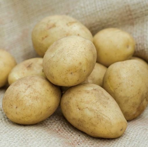 Golden Wonder Maincrop 2Kg  Seed Potatoes   Nationwide Delivery