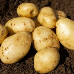 Majestic Maincrop 2kg| Seed Potatoes | Nationwide Delivery