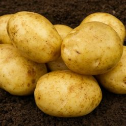 Marfona Second Earlies 2kg| Seed Potatoes | Nationwide Delivery
