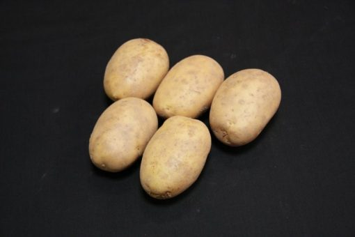 Maris Piper Maincrop 2kg| Seed Potatoes | Nationwide Delivery