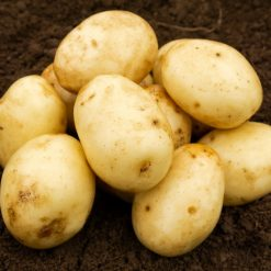 Nadine Second Earlies 2kg| Seed Potatoes | Nationwide Delivery