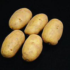 Nicola Second Earlies 2kg| Seed Potatoes | Nationwide Delivery