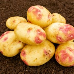 Picasso Maincrop 2kg| Seed Potatoes | Nationwide Delivery