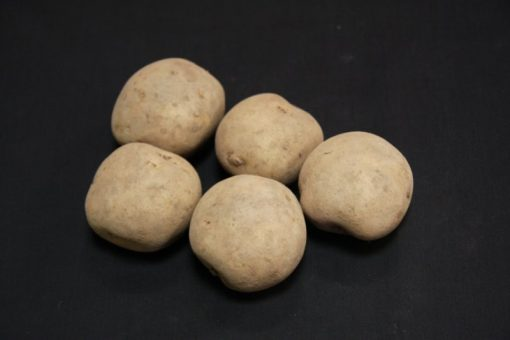 Rocket First earlies 2kg| Seed Potatoes | Nationwide Delivery