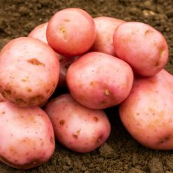 Sarpo Mira Maincrop 2Kg| Seed Potatoes | Nationwide Delivery