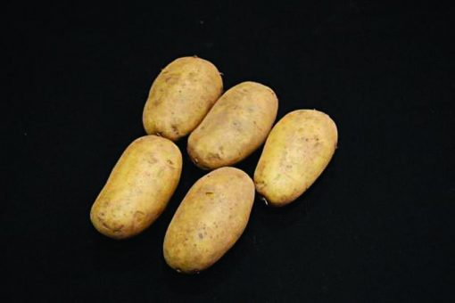 Sharps Express First Earlies 2Kg| Seed Potatoes | Nationwide Delivery