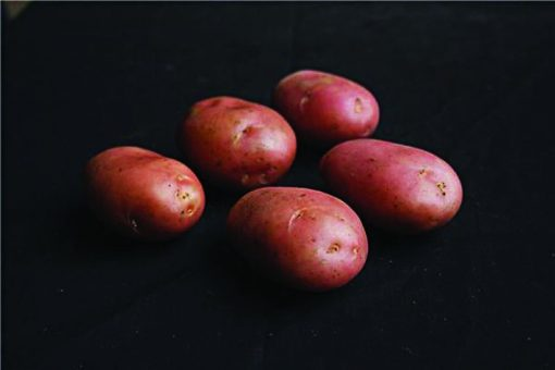Desiree Maincrop 2Kg| Seed Potatoes | Nationwide Delivery