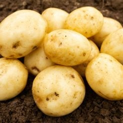 Valor Maincrop 2kg| Seed Potatoes | Nationwide Delivery