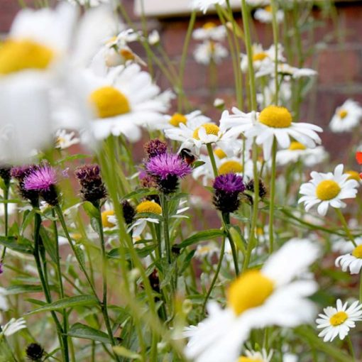 Pretty Perennials Mix Seeds by Suttons Seeds  140010  Nationwide Delivery On Flower Seeds