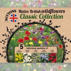 Wildflower Seeds - Collection by Suttons Seeds| 140012| Nationwide Delivery On Flower Seeds