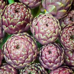 Artichoke Purple de Provence P&P by Suttons Seeds| 142001| Nationwide Delivery