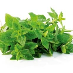 Oregano P&P by Suttons Seeds| 142017| Nationwide Delivery