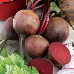 Beetroot Boltardy by Suttons Seeds| 151383| Nationwide Delivery