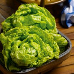 Lettuce All The Year Round by Suttons Seeds  167975  Nationwide Delivery