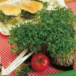 Mustard White by Suttons Seeds| 171600| Nationwide Delivery