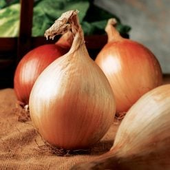 Onion Ailsa Craig by Suttons Seeds| 172866| Nationwide Delivery
