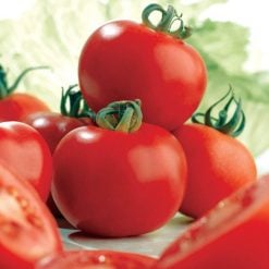 Tomato Ailsa Craig by Suttons Seeds| 180850| Nationwide Delivery