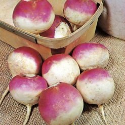 Turnip Armand by Suttons Seeds| 182945| Nationwide Delivery