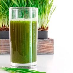 Wheatgrass by Suttons Seeds| 183080| Nationwide Delivery