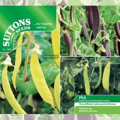 Pea Mangetout Multicoloured Mix by Suttons Seeds  193010  Nationwide Delivery