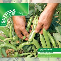 Broad Bean The Sutton (Dwarf) by Suttons Seeds| 194694| Nationwide Delivery