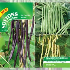 Climbing French Bean Colourful Climbing Mix by Suttons Seeds| 195570| Nationwide Delivery