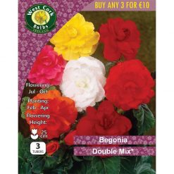 Begonia Double Mix | BDMPP | Summer Bulbs Nationwide Delivery