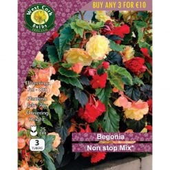 Begonia Non Stop Mix | BNSMIXPP | Summer Bulbs Nationwide Delivery