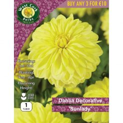 Dahlia Decorative 'Sunlady' 1 Tuber | DDSYPP | Summer Bulbs Nationwide Delivery
