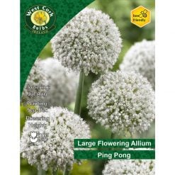 Allium Ping Pong  Bulbs | APPPP | Spring Bulbs Delivered