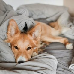 Dog Beds and Blankets