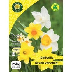 Daffodil Mixed Varieties 25Kg 25kg Bulbs | MIX25 | Spring Bulbs Delivered