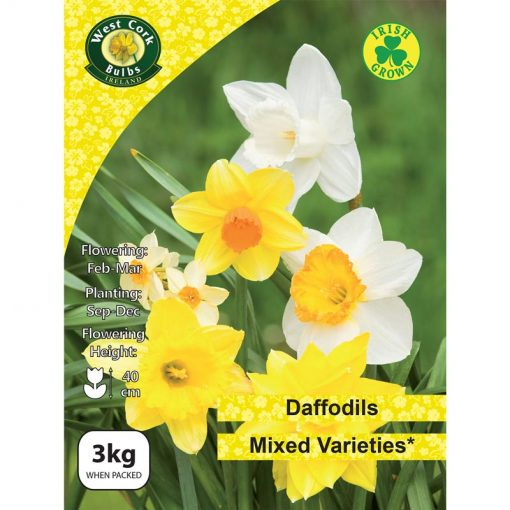 Daffodil Mixed Varieties 3kg Net | MIX03 | Spring Bulbs Delivered